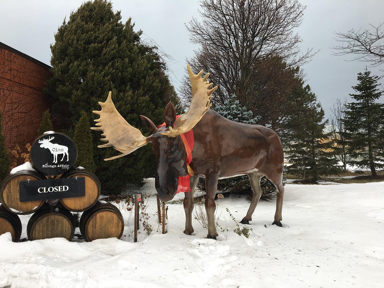 wld_190130_moose
